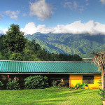 lime-tree-farms-places-to-stay-in-the-blue-mountains-jamaica