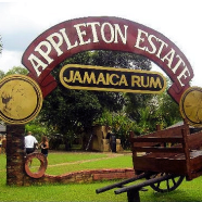Jamaican Rum & the Historic Appleton Estate