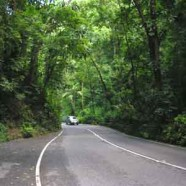 Jamaica's Fern Gully to close April 4, 2011 for 9 months